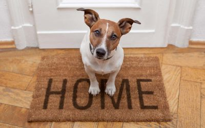Are palliative veterinary care and pet euthanasia better and less traumatic if done at home?