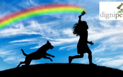 Helping children through the sudden loss of a pet
