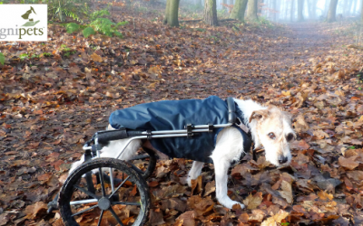 Rudi's wheels: one little dog's story about living with mobility issues