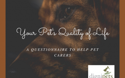 Using quality of life assessments in pets